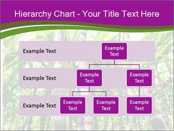 Sugarcane plants PowerPoint Templates - Slide 67