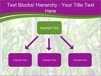 Sugarcane plants PowerPoint Template - Slide 69