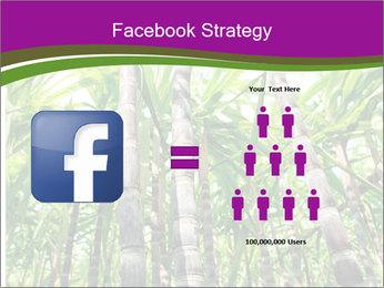 Sugarcane plants PowerPoint Template - Slide 7