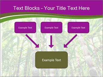 Sugarcane plants PowerPoint Template - Slide 70