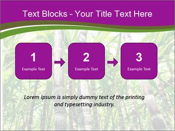 Sugarcane plants PowerPoint Templates - Slide 71