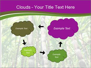 Sugarcane plants PowerPoint Templates - Slide 72