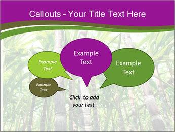 Sugarcane plants PowerPoint Template - Slide 73