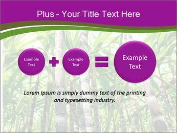 Sugarcane plants PowerPoint Template - Slide 75
