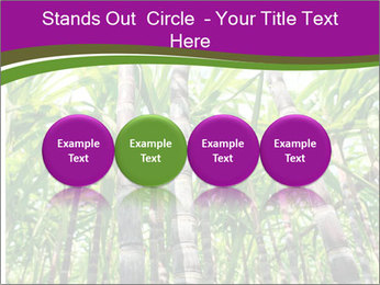 Sugarcane plants PowerPoint Templates - Slide 76