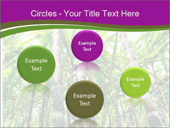 Sugarcane plants PowerPoint Templates - Slide 77