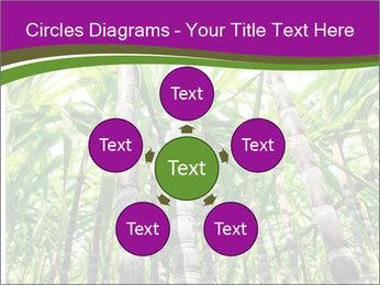 Sugarcane plants PowerPoint Template - Slide 78