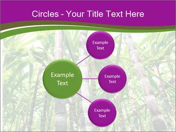 Sugarcane plants PowerPoint Templates - Slide 79