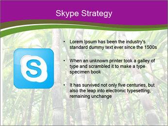Sugarcane plants PowerPoint Templates - Slide 8