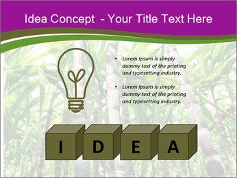 Sugarcane plants PowerPoint Templates - Slide 80