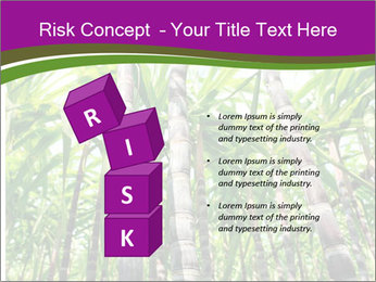 Sugarcane plants PowerPoint Template - Slide 81