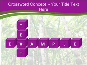 Sugarcane plants PowerPoint Template - Slide 82