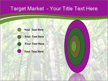 Sugarcane plants PowerPoint Template - Slide 84