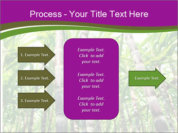 Sugarcane plants PowerPoint Template - Slide 85