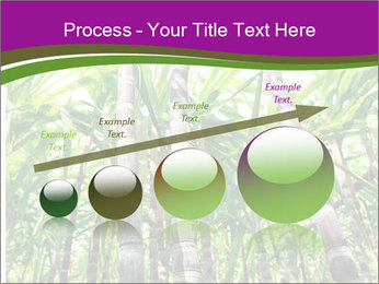 Sugarcane plants PowerPoint Template - Slide 87