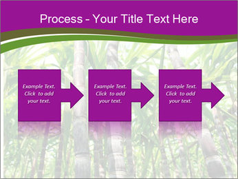 Sugarcane plants PowerPoint Template - Slide 88