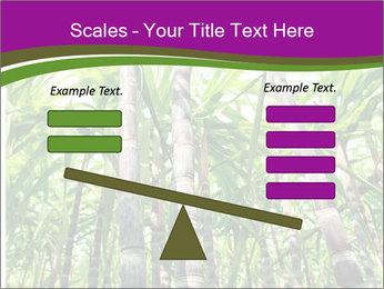Sugarcane plants PowerPoint Templates - Slide 89