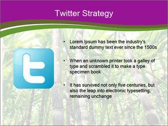 Sugarcane plants PowerPoint Template - Slide 9
