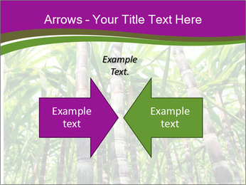 Sugarcane plants PowerPoint Template - Slide 90