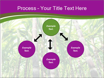 Sugarcane plants PowerPoint Template - Slide 91