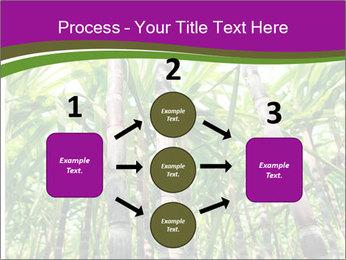 Sugarcane plants PowerPoint Template - Slide 92