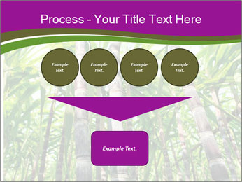 Sugarcane plants PowerPoint Template - Slide 93