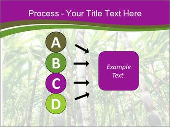 Sugarcane plants PowerPoint Template - Slide 94