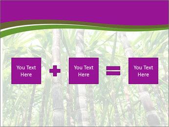 Sugarcane plants PowerPoint Template - Slide 95