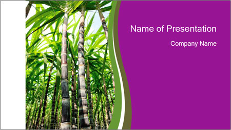 Sugarcane plants PowerPoint Template