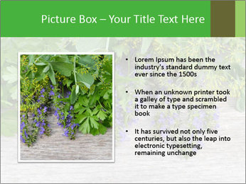Fresh aromatic herbs PowerPoint Templates - Slide 13