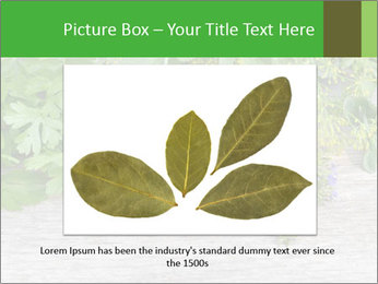 Fresh aromatic herbs PowerPoint Templates - Slide 16