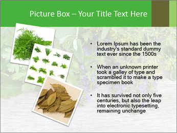 Fresh aromatic herbs PowerPoint Templates - Slide 17