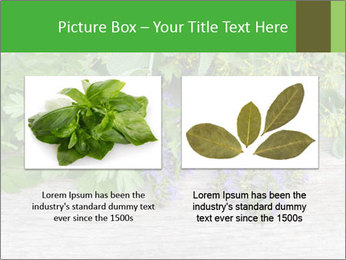 Fresh aromatic herbs PowerPoint Templates - Slide 18