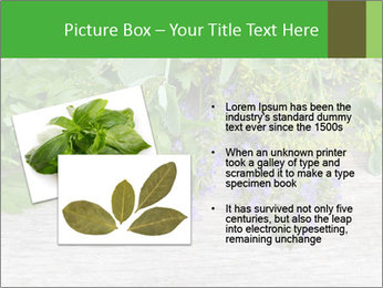 Fresh aromatic herbs PowerPoint Templates - Slide 20