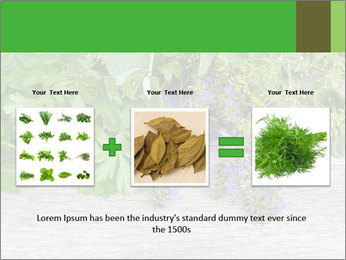 Fresh aromatic herbs PowerPoint Templates - Slide 22