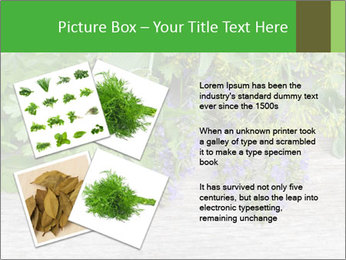 Fresh aromatic herbs PowerPoint Templates - Slide 23