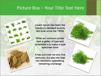 Fresh aromatic herbs PowerPoint Templates - Slide 24