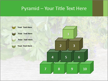 Fresh aromatic herbs PowerPoint Templates - Slide 31