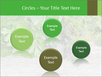 Fresh aromatic herbs PowerPoint Templates - Slide 77