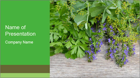 Fresh aromatic herbs PowerPoint Template