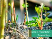 Japanese knotweed PowerPoint Templates