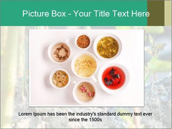Japanese knotweed PowerPoint Templates - Slide 16