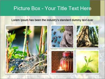 Japanese knotweed PowerPoint Templates - Slide 19
