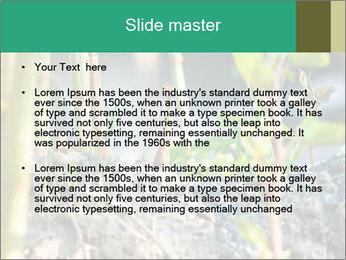 Japanese knotweed PowerPoint Templates - Slide 2