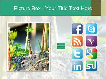 Japanese knotweed PowerPoint Templates - Slide 21