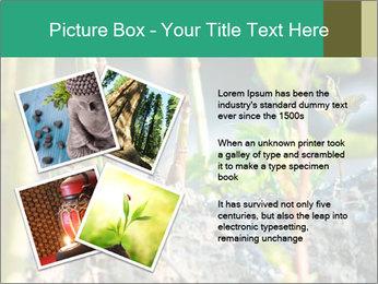 Japanese knotweed PowerPoint Templates - Slide 23