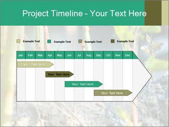 Japanese knotweed PowerPoint Templates - Slide 25