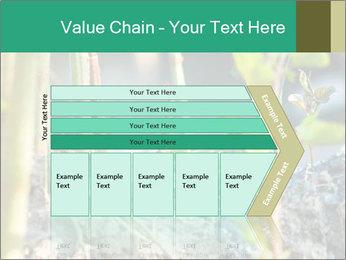 Japanese knotweed PowerPoint Templates - Slide 27