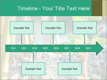 Japanese knotweed PowerPoint Templates - Slide 28