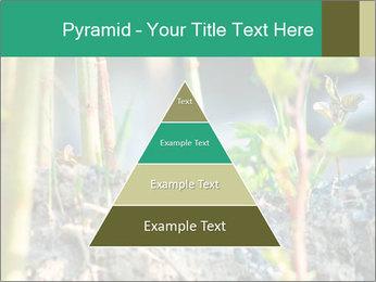 Japanese knotweed PowerPoint Templates - Slide 30